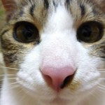 【猫クイズ】「超!癒し系!」猫マルバツクイズオープン!