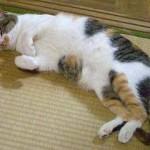 【特集】猫好きかどうかの境目?猫クイズ!中級