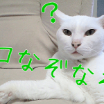 【猫なぞなぞ】超マニアック!猫好きのためのネコなぞなぞ追加!
