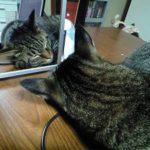 【特集】わかれば猫博士?猫クイズ!上級