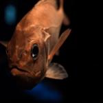 【なぞなぞ The Best!】文化の日なぞなぞ「4匹の魚」の解答と説明