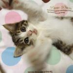 「クイズファンネット」と「猫の飼い方」がコラボ クイズ正解者に「高級ネコ缶」が当たる!
